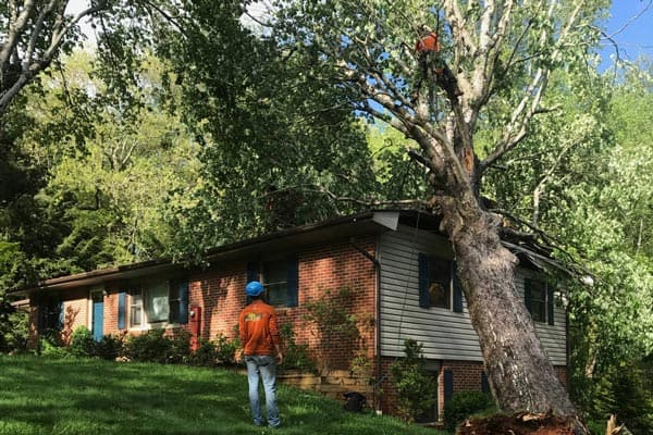 tree-damage-asheville-nc