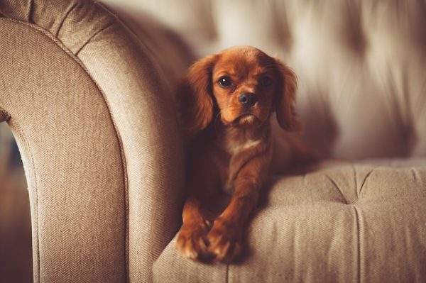 an adorable puppy sitting on a sofa